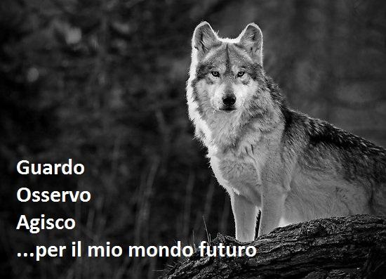 lonewolf1